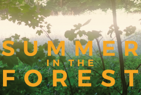 Summer In The Forest: All Things Beautiful In Their Time